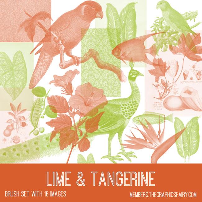 vintage lime and tangerine ephemera brush set