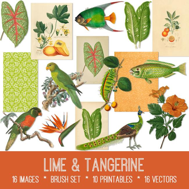 Lime and Tangerine ephemera vintage images