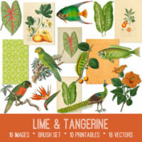 vintage lime & tangerine ephemera bundle
