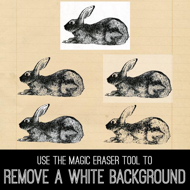 magic eraser tool remove white background PSE tutorial
