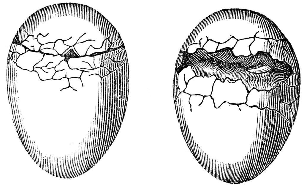 antique cracked eggs clip art