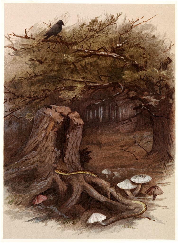 bird snake mushrooms forest Fall Landscape Image