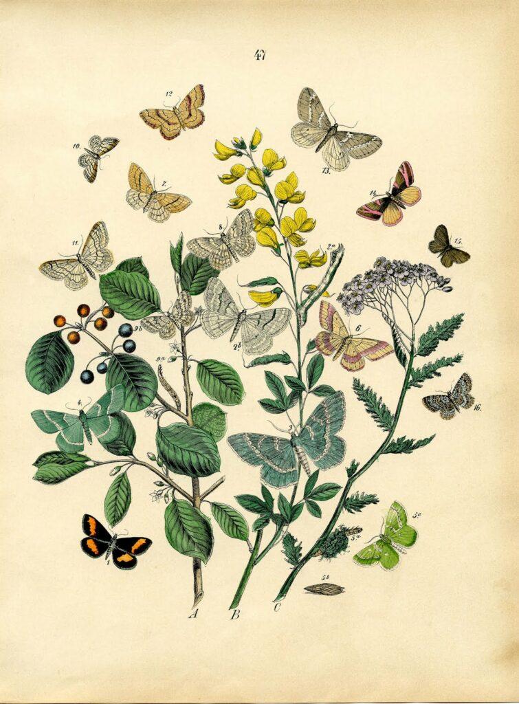 bohemian butterfly yellow flowers illustration
