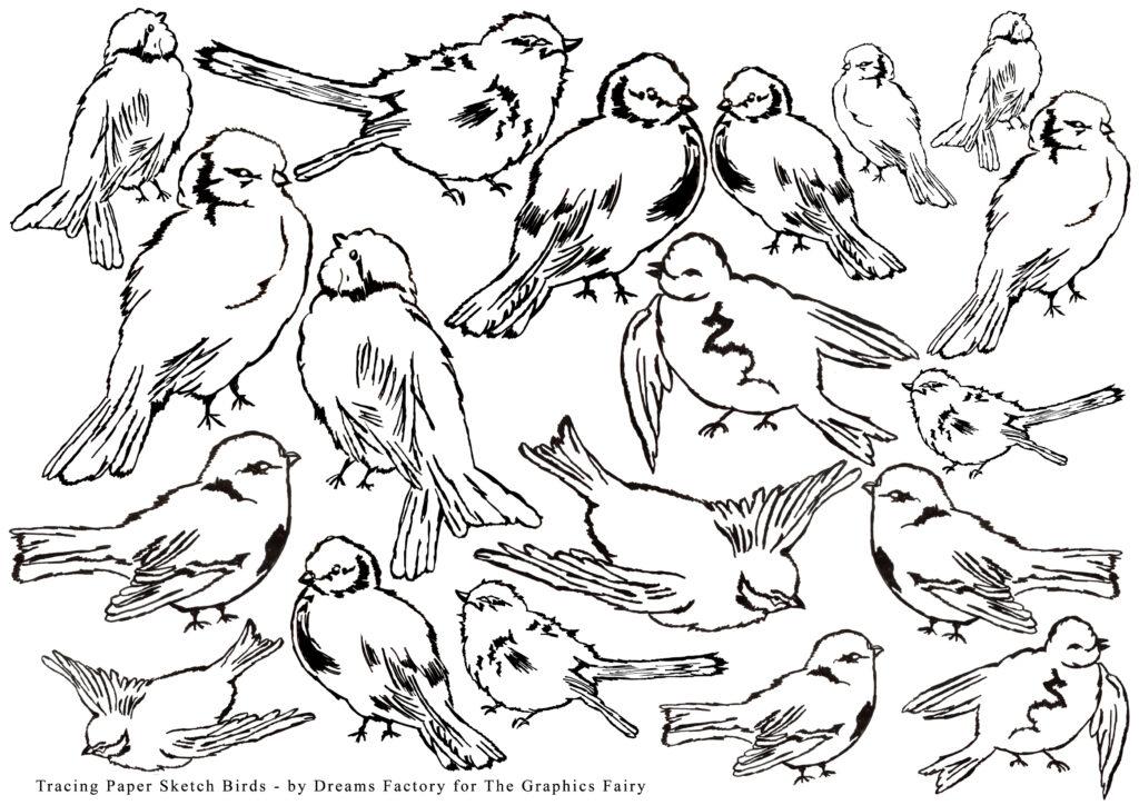 DIY Tracing Paper Sketch Birds