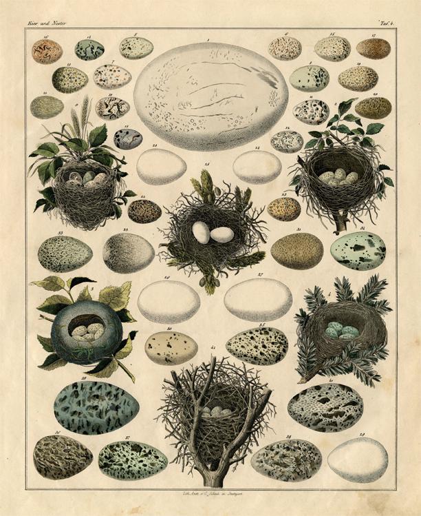 antique eggs nests chart clipart