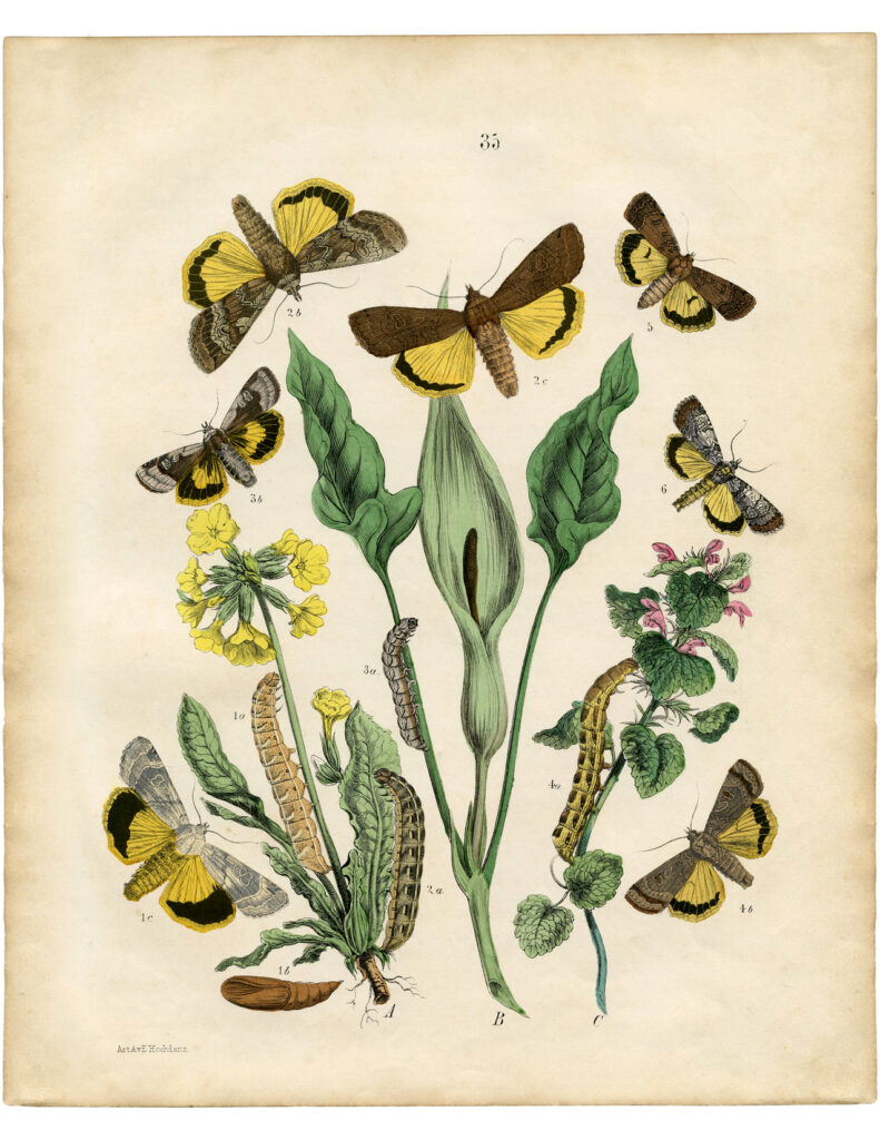 vintage yellow butterfly caterpillar floral image