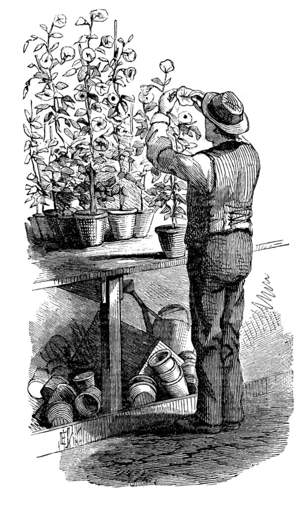 vintage gardener plants potting bench illustration