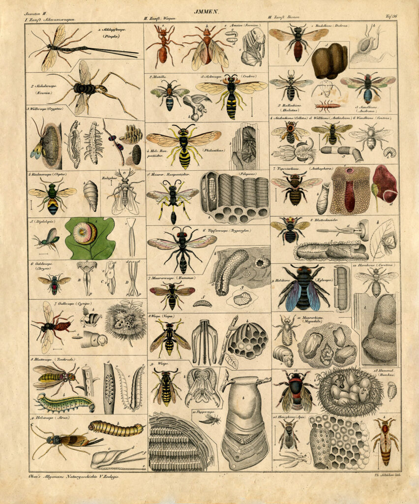 insect chart bees illustration