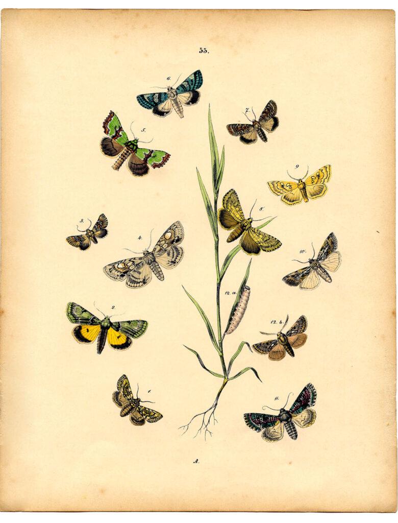 moths grass natural history image