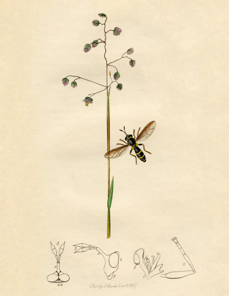 bee insect botanical vintage image