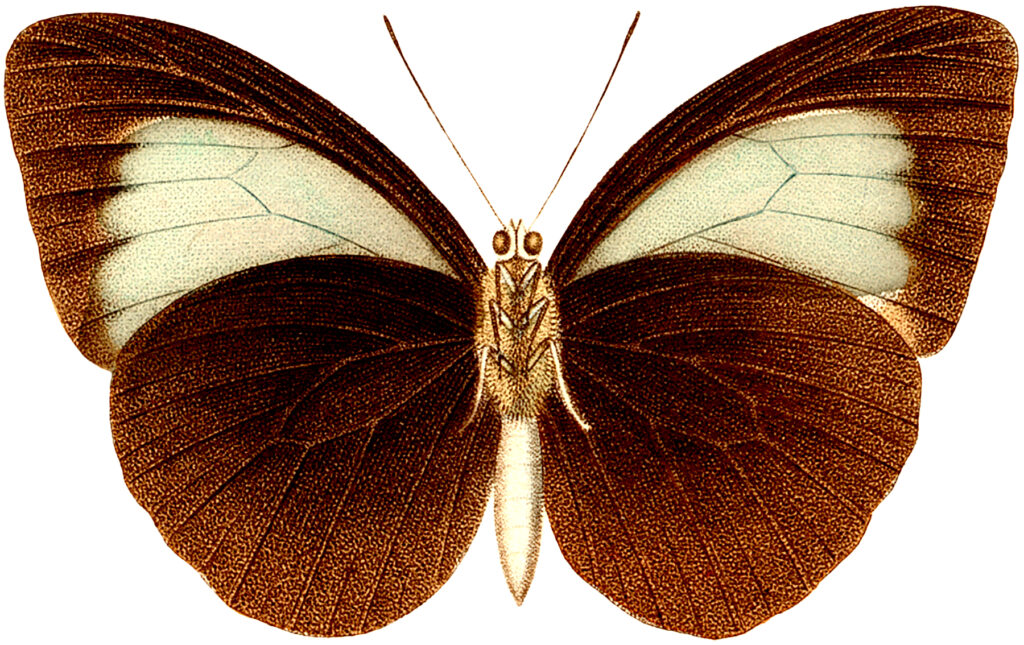 brown and tan butterfly image