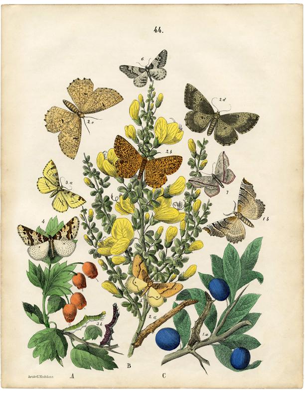 vintage natural history printable image