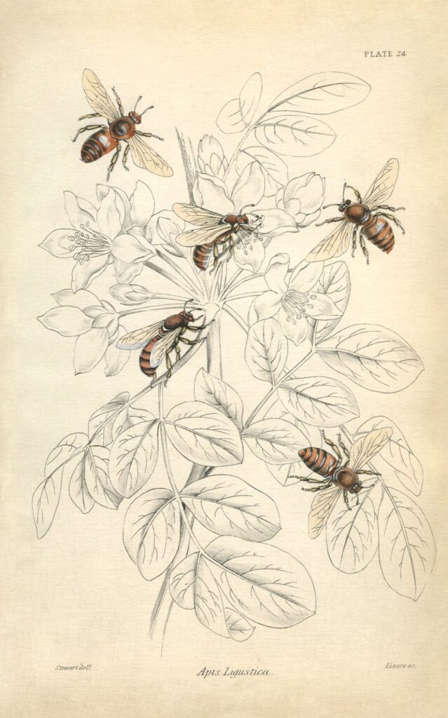 bees plant leaves illustration