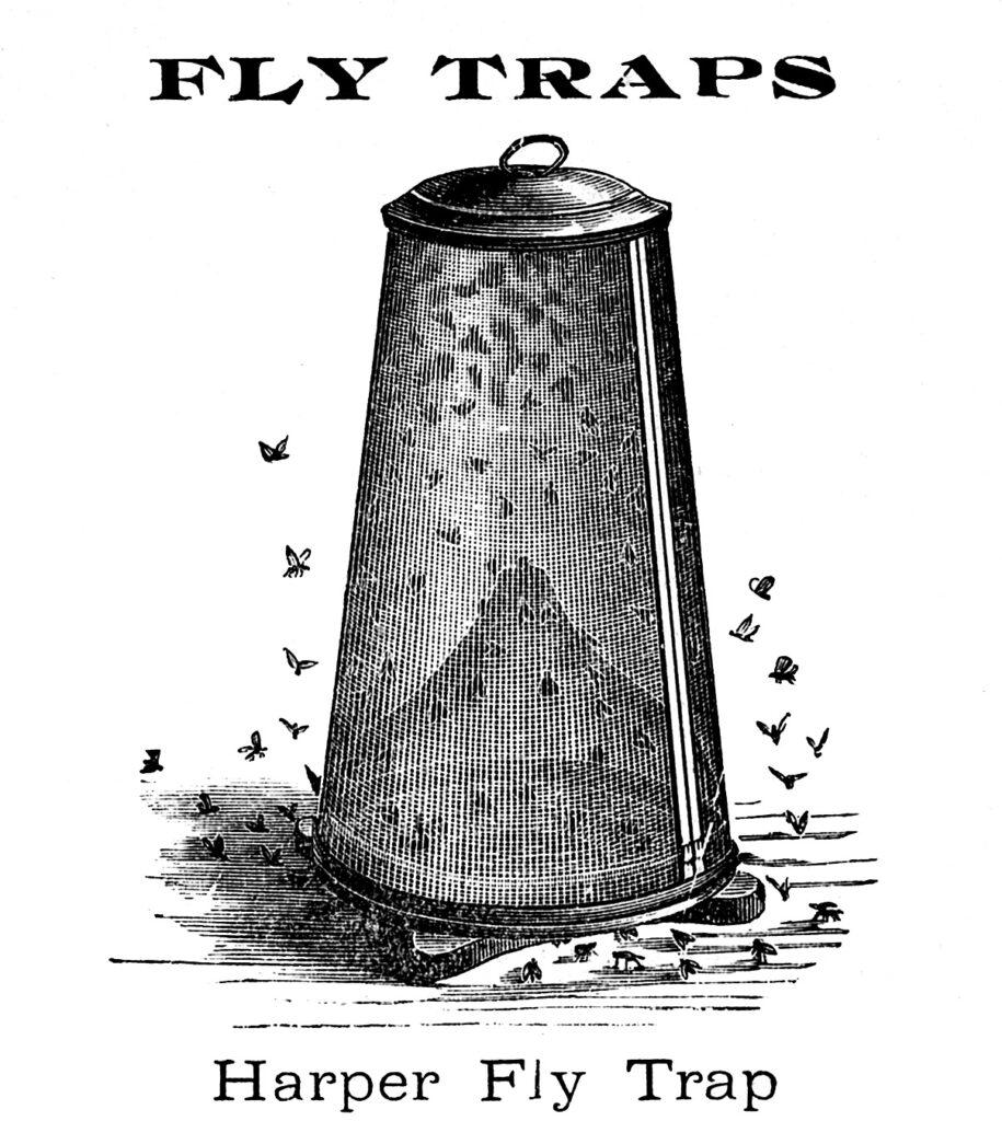 fly trap vintage illustration