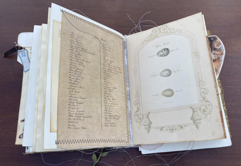 script paper egg natural history print