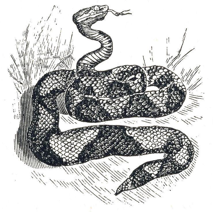 vintage snake grass clipart