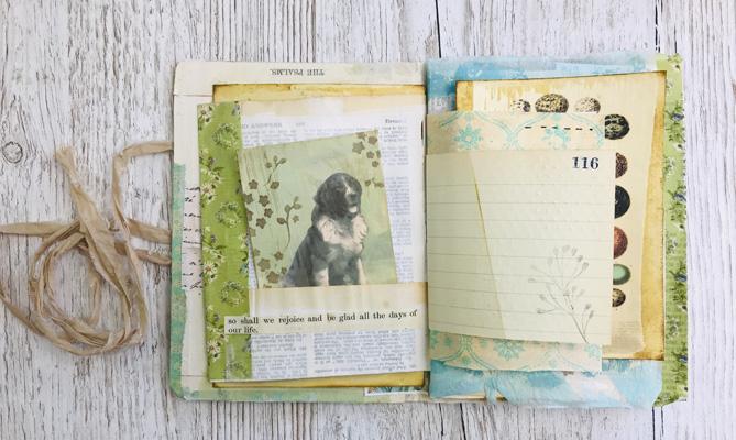 color pallet dog image