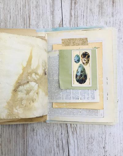natural history eggs card