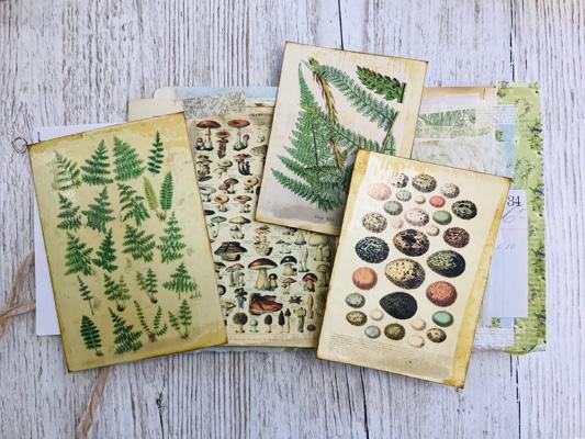 natural history printable journal cards