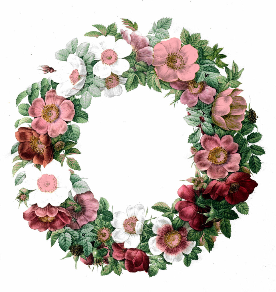 pink white flowers wreath clipart