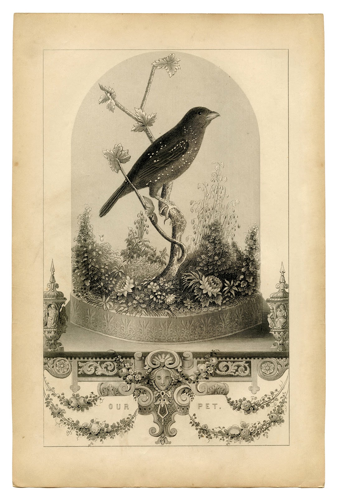 picture regarding Vintage Printable identify Typical Printable - Breathtakingly Eye-catching Chook within just Cloche