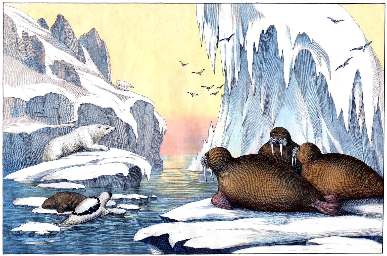 Instant Art Printable - Extraordinary Arctic Scene - Polar ...