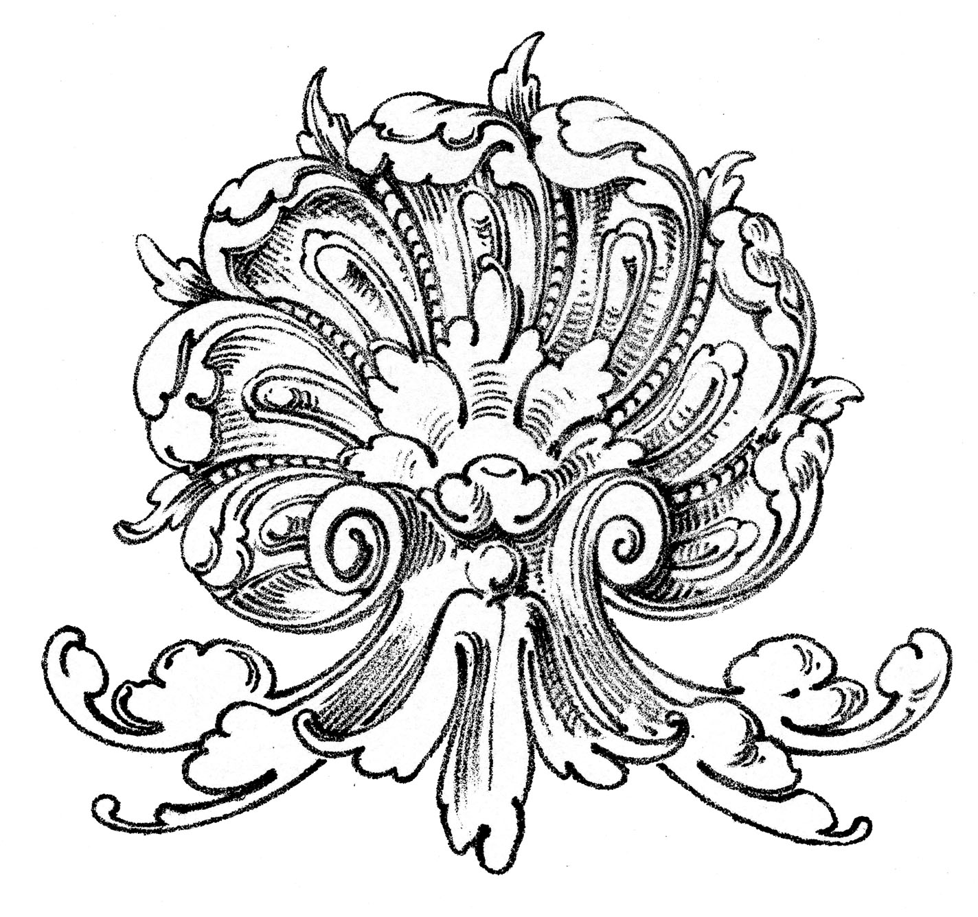 Line Art Graphics : Vintage ornamental clip art shell with scrolls the