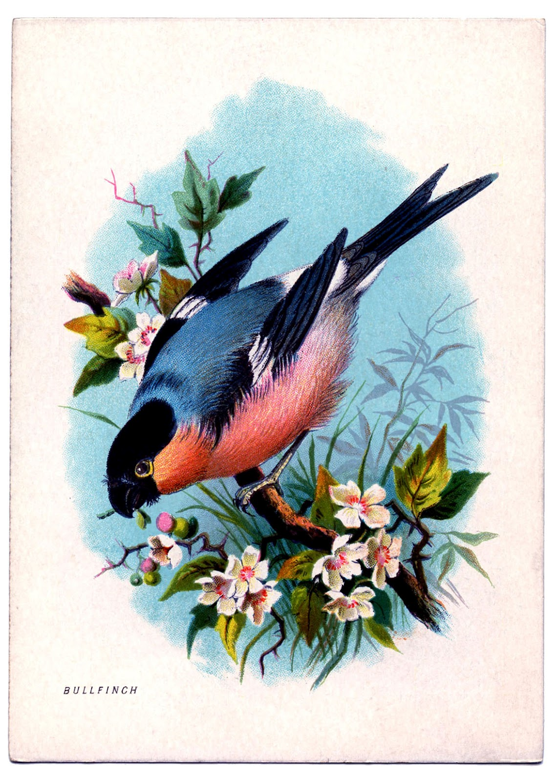 Instant Art Printable - Charming Bird on Floral Branch ...