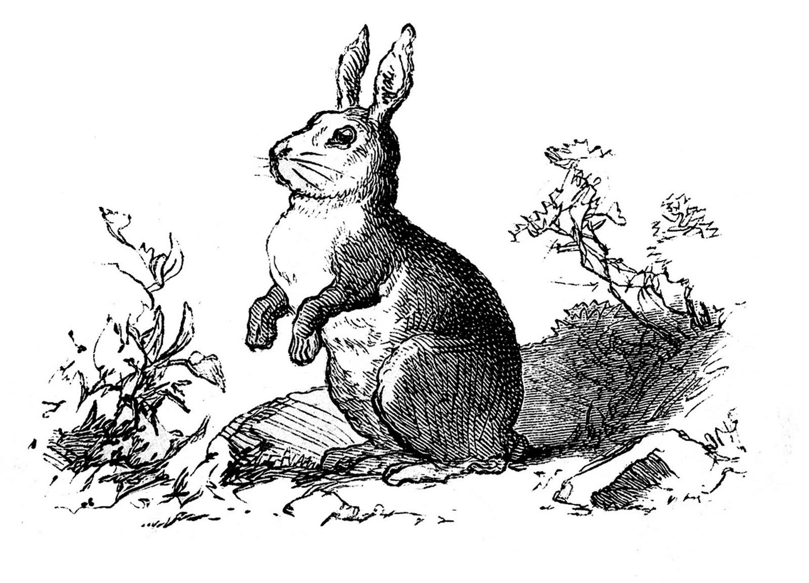 Vintage Clip Art - Precious Bunny Engraving - The Graphics ...