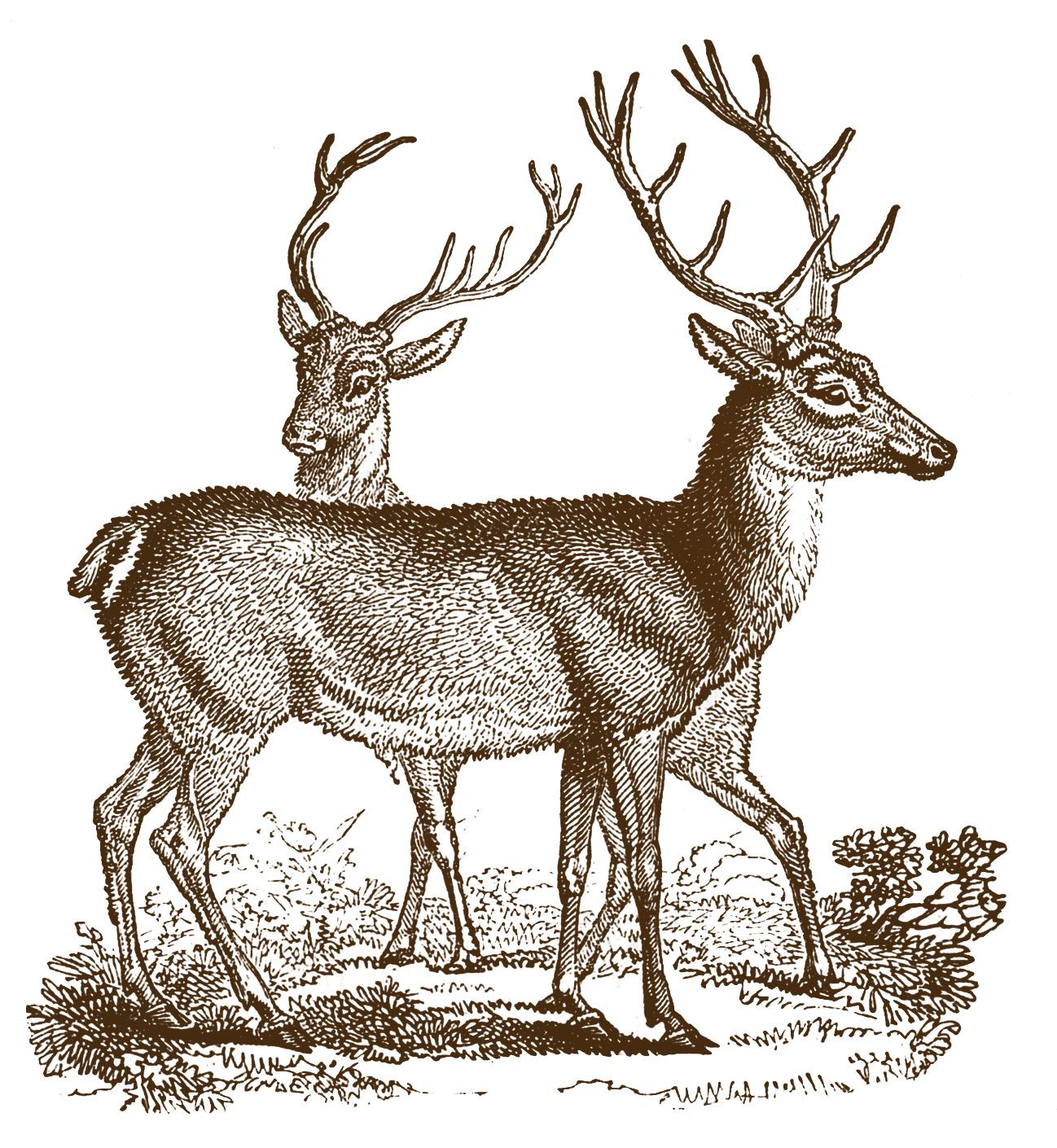 Geeky image for deer printable
