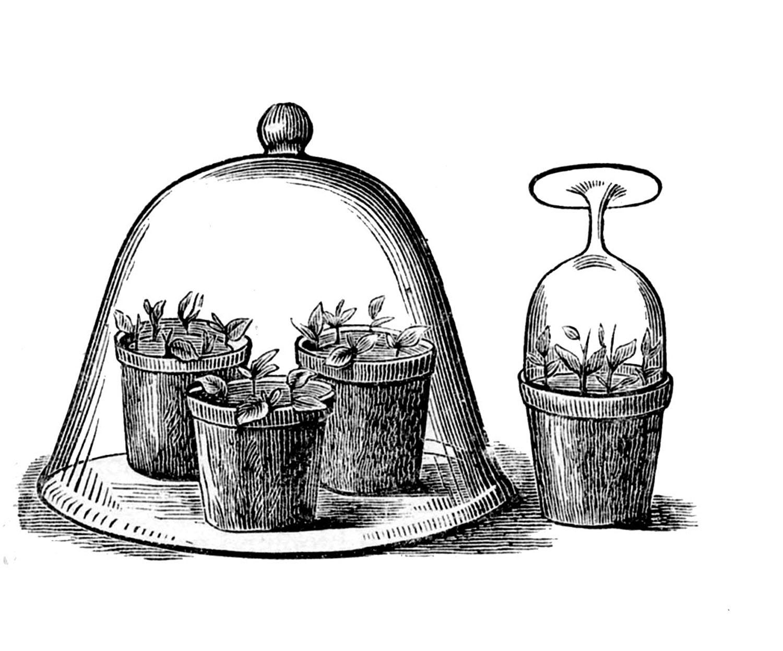 Vintage garden clip art glass cloche with pots the graphics fairy vintage garden clip art glass cloche with pots workwithnaturefo