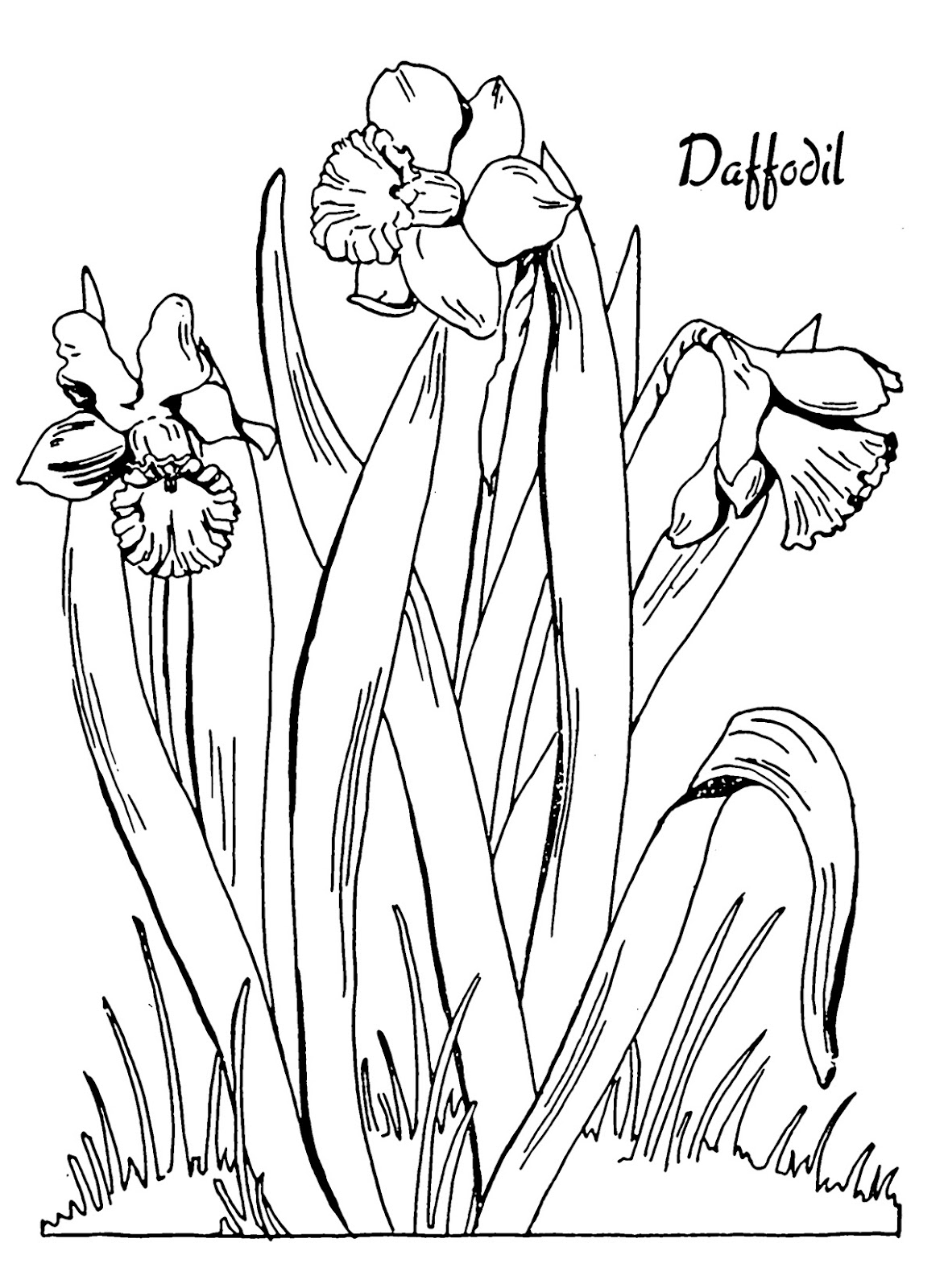 Kids printable daffodil coloring page the graphics fairy