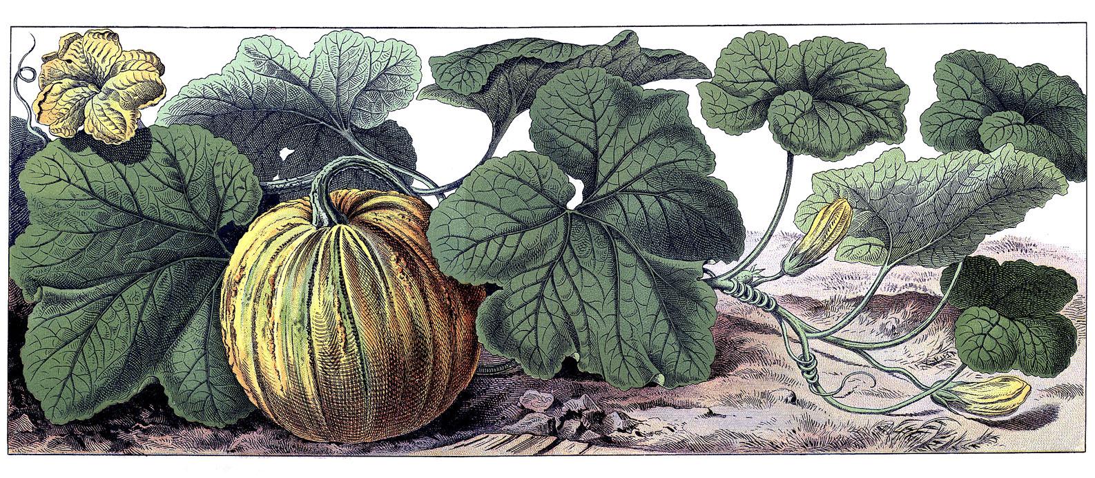 Vintage Halloween Graphic - Botanical Pumpkin - The ...