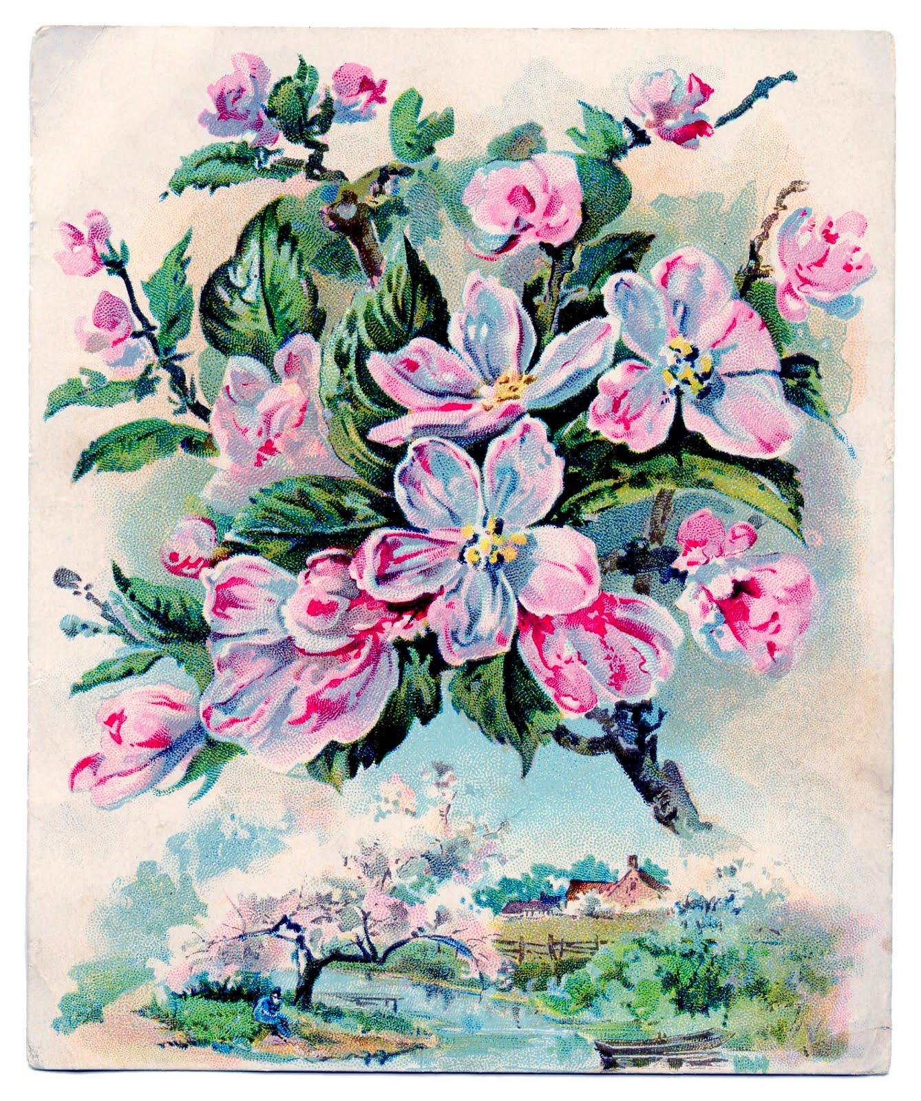 Vintage Clip Art Gorgeous Pink Blossoms The Graphics Fairy