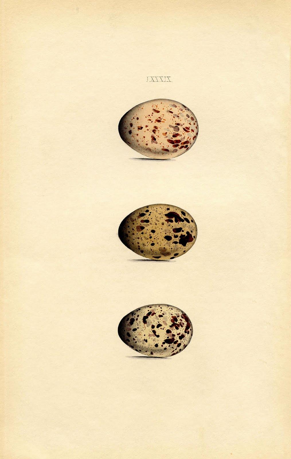 instant art printable morris egg print natural history the