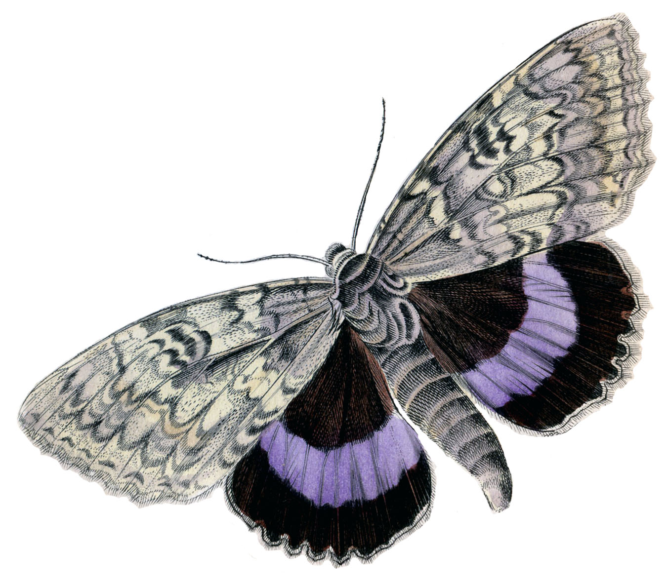 Instant Art Printable Colorful Butterflies Moths The Graphics
