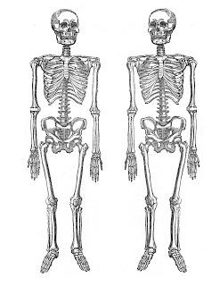 Decisive image with regard to skeletons printable