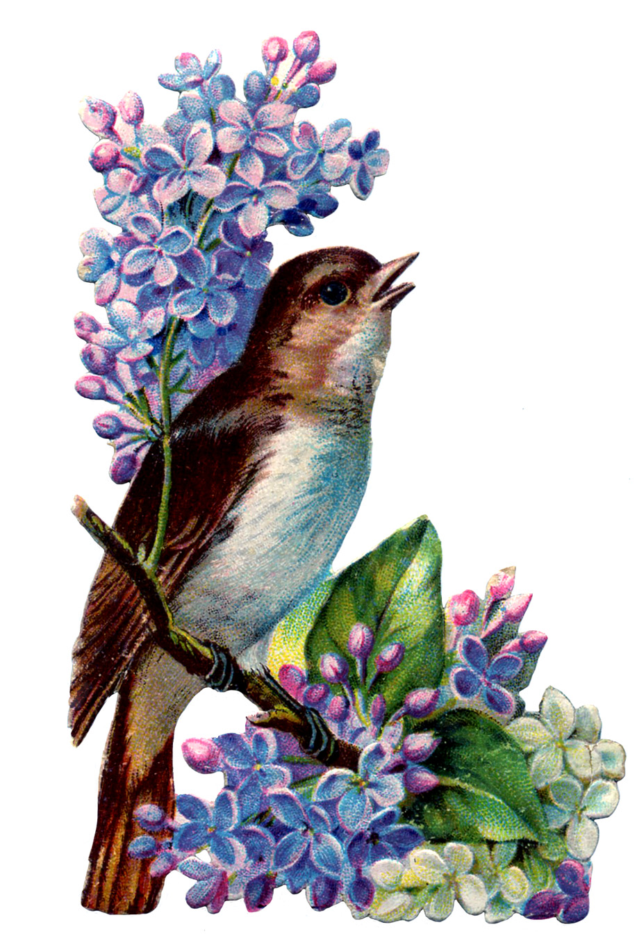 Vintage Image - Bird with Lilacs - The Graphics Fairy