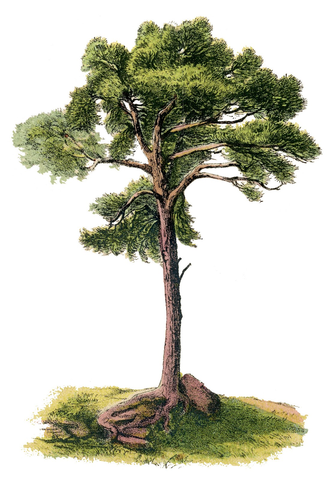 http://thegraphicsfairy.com/wp-content/uploads/blogger/-GXi8yHjt0fc/T-zV1MX-VfI/AAAAAAAASgI/uChxO5KV9yE/s1600/tree-Vintage-GraphicsFairy6.jpg
