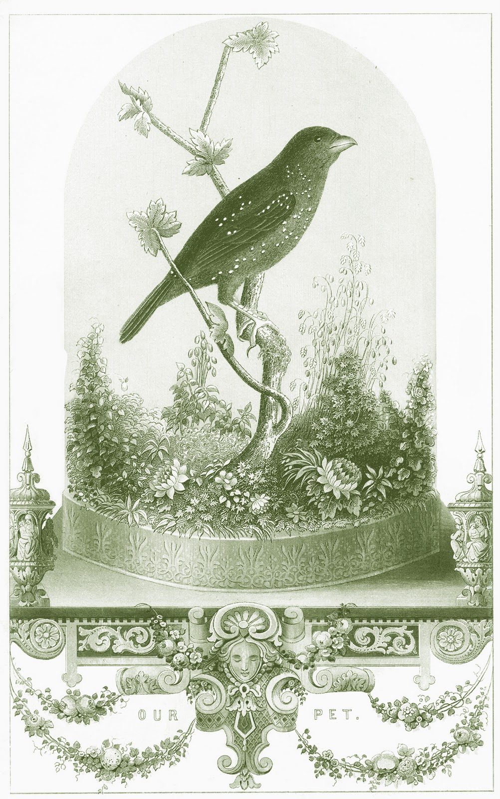 Vintage Printable - Breathtakingly Beautiful Bird in Cloche - The ...