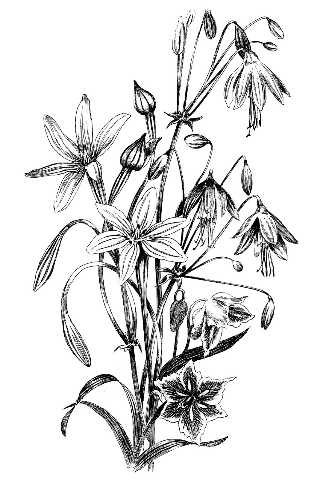 Black And White Line Drawing Flowers : Black and white floral drawing the graphics fairy