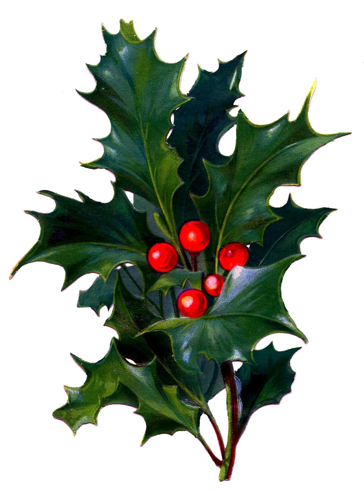 Victorian Christmas Clip Art - Holly with Bright Red Berries - The ...