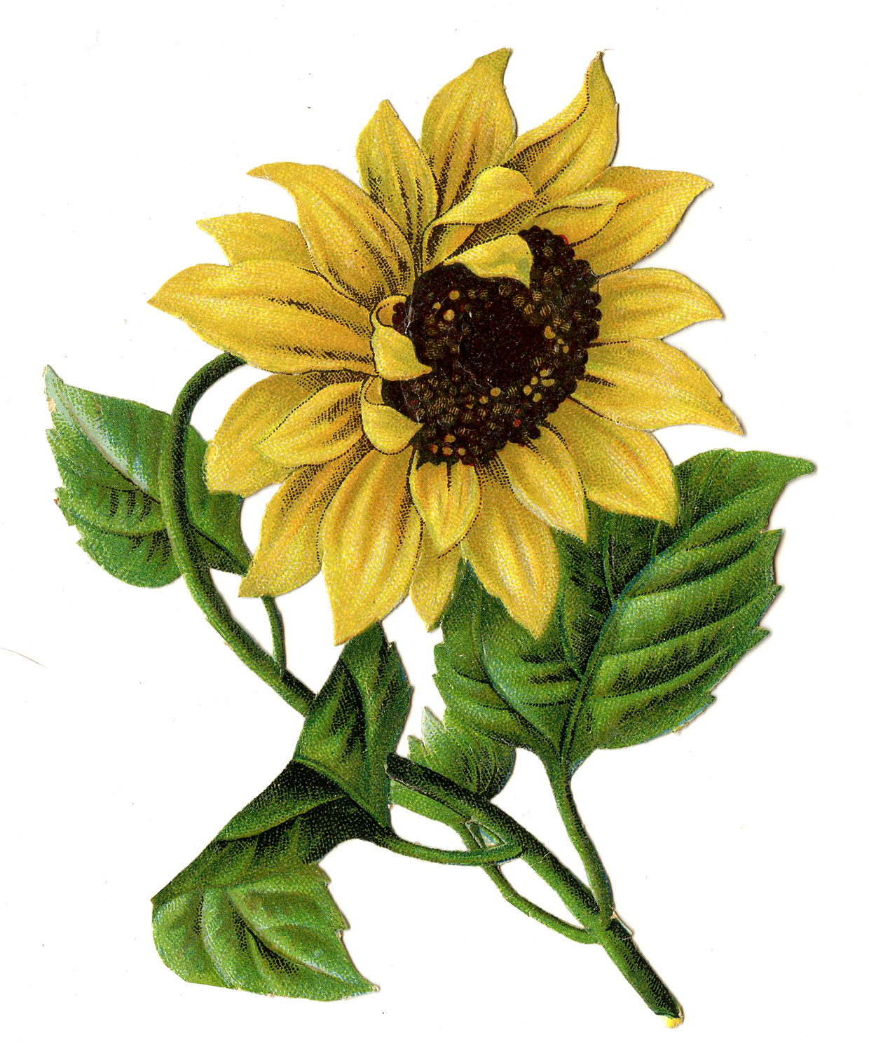 Simplicity image for printable pictures of sunflowers