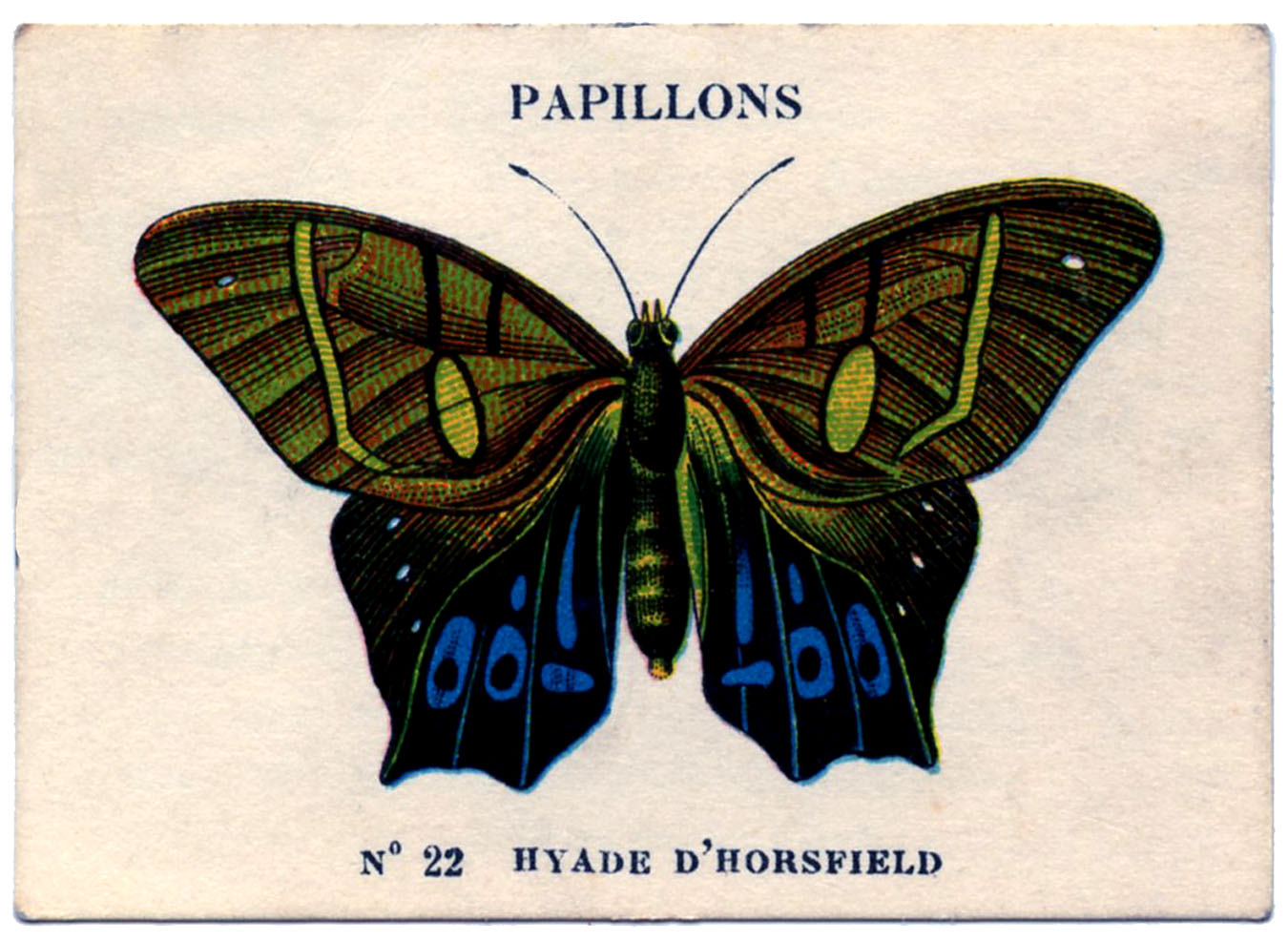 vintage image french butterfly 3 the graphics fairy