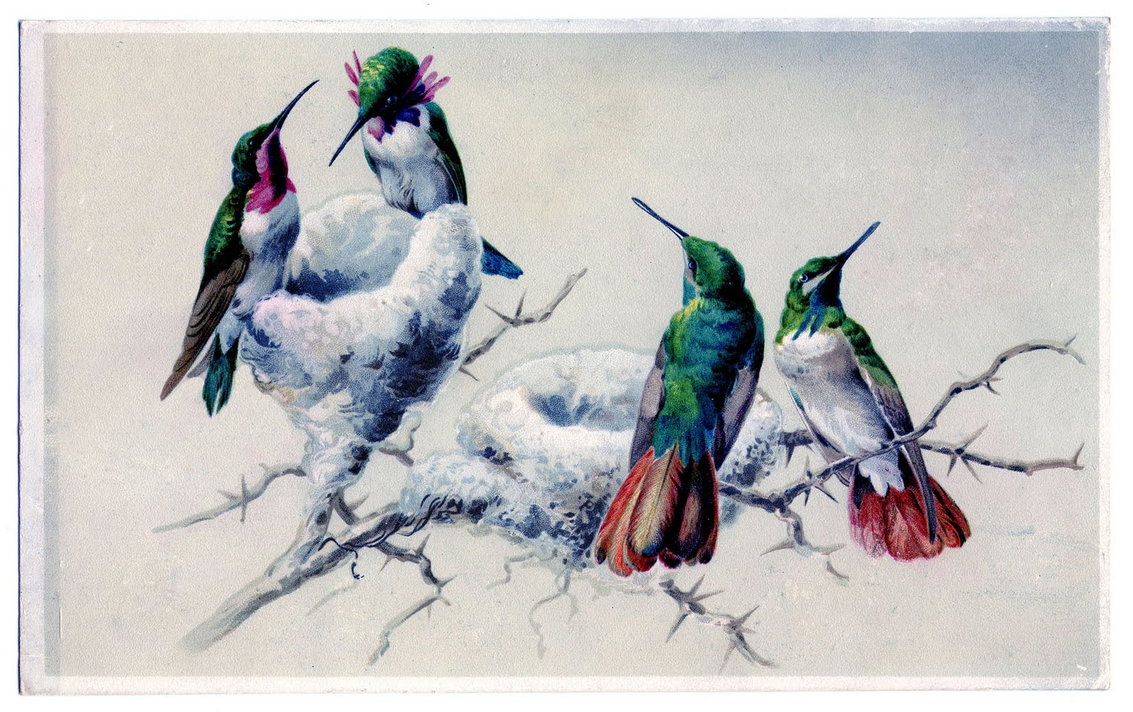 printing primer instant art project hummingbirds
