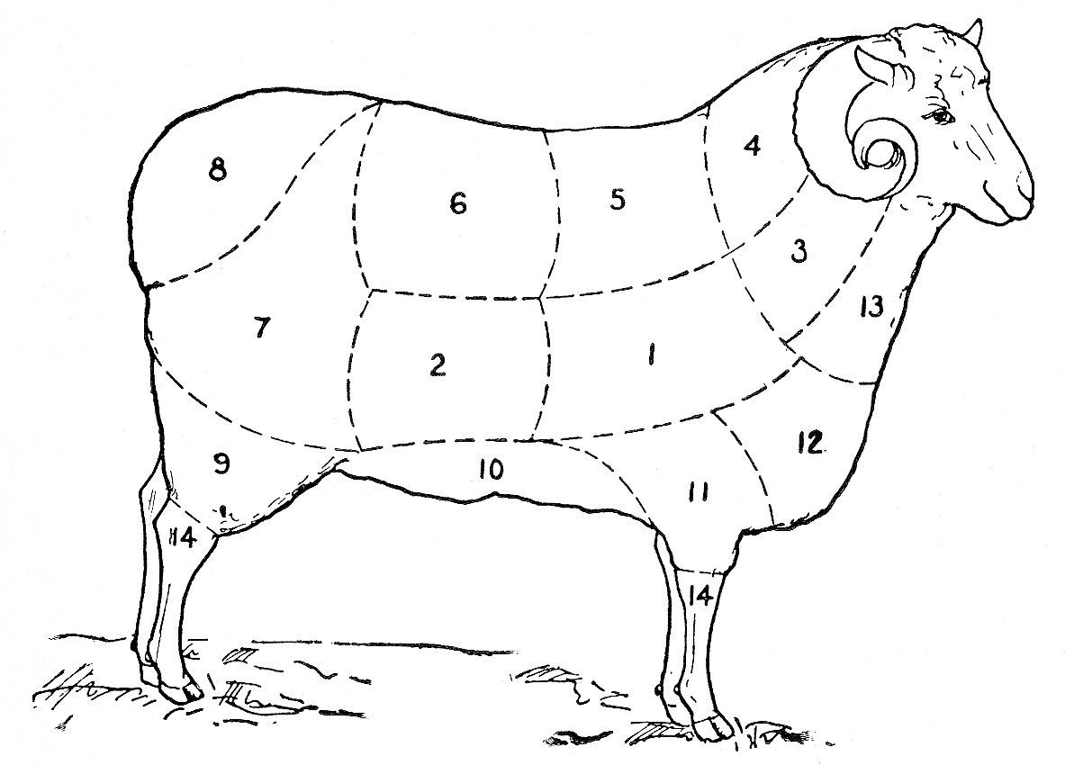 Vintage Clip Art Sheep Diagram on cuts of meat clip art