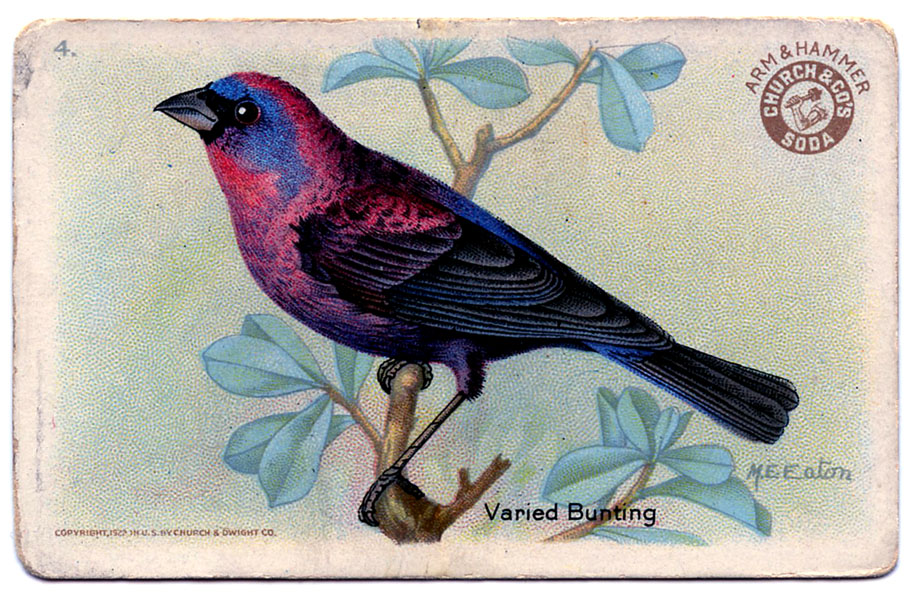 Pretty Bird Drawing Vintage Graphic – Pretty Bird