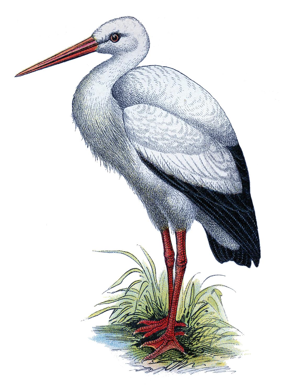 Картинки птицы для детей детского сада