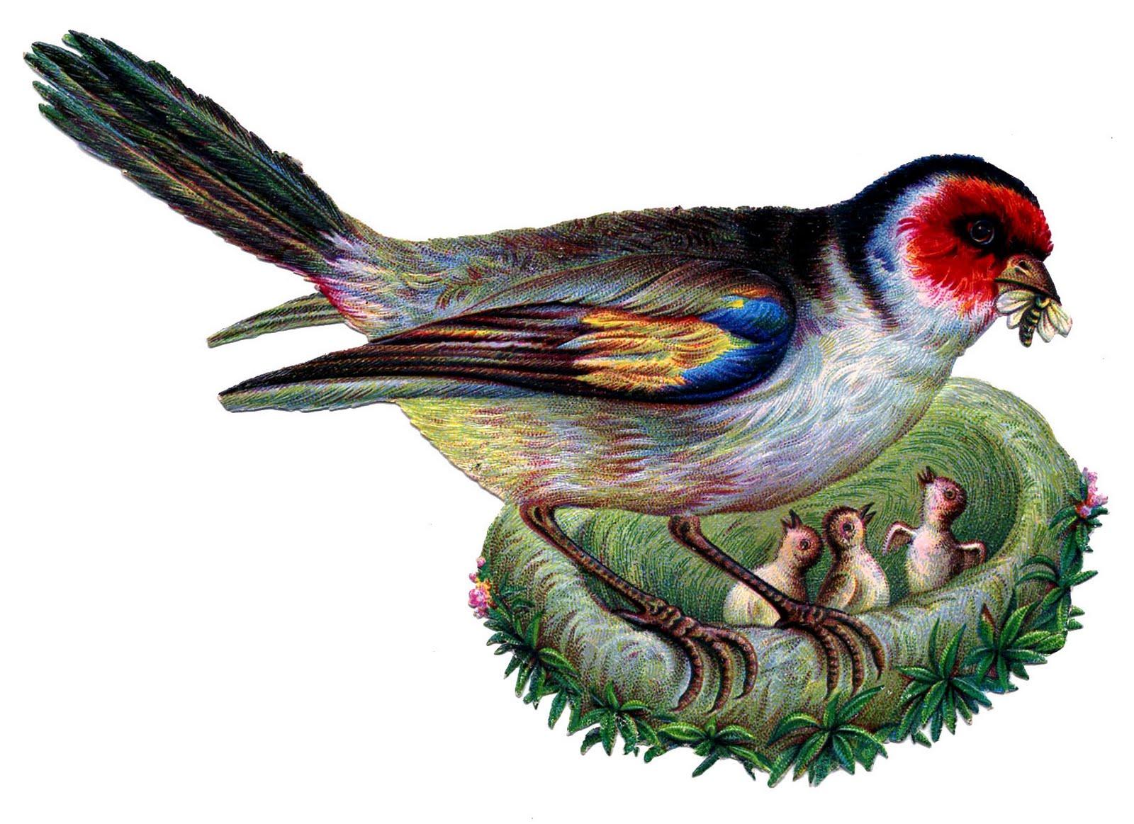 http://thegraphicsfairy.com/wp-content/uploads/blogger/-OAvk0IJ_GvQ/TYPt8IEWWyI/AAAAAAAALVo/Vz5KZ-2O4Ew/s1600/bird-nest-vintage-image--graphicsfairy003b.jpg