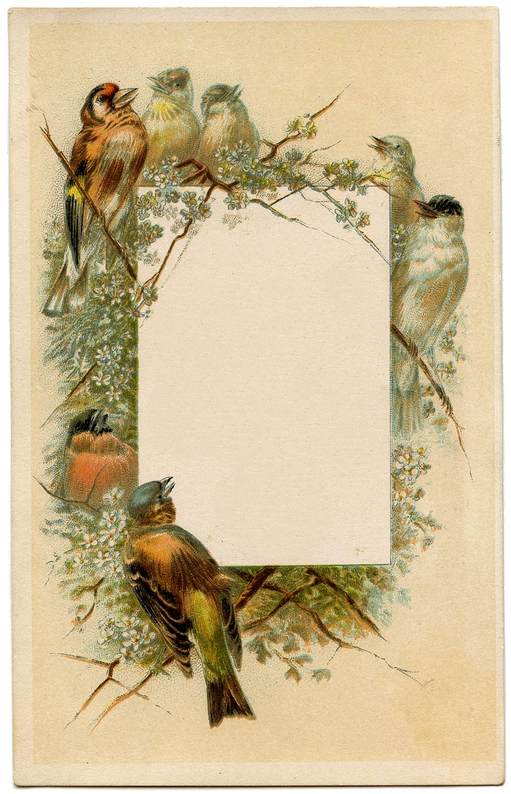 Vintage frames birds and flowers the graphics fairy for Graphics fairy